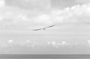 Flying (Short-Haul)