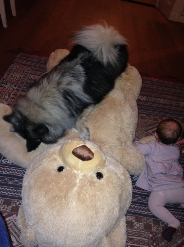 Dog baby playing together