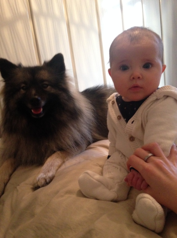 dog baby sitting together