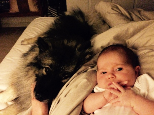 Dog together with baby