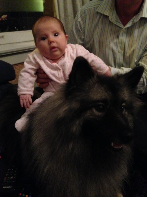 baby riding dog like horse